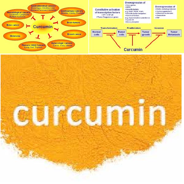 CURCUMIN  TRONG TINH NGHỆ